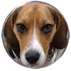 Beagle Ball Marker